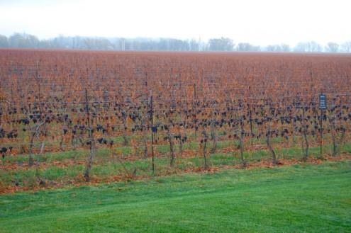 Stratus vines on eatlivetravelwrite.com