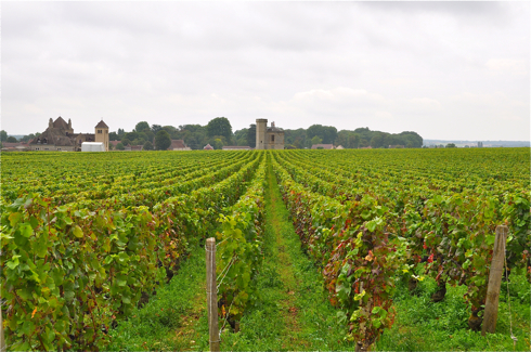 Vineyards in Clos de Vougeot, Burgundy