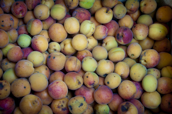 crazy apricots at the nerac Market