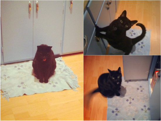 Cleo collage