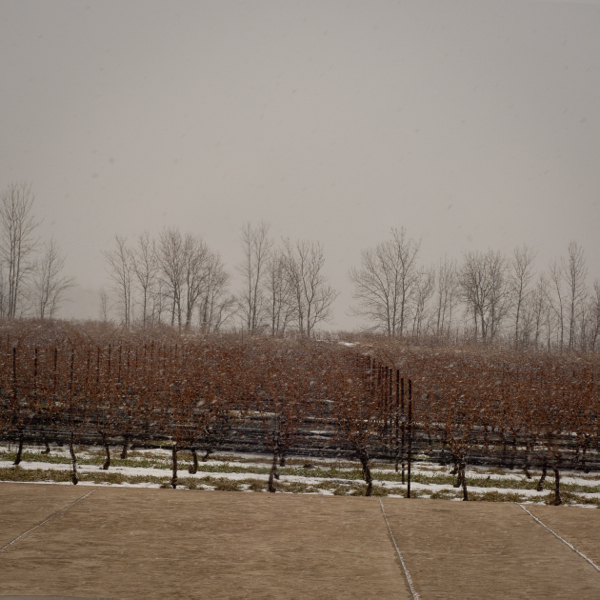 View from Southbrook Winery Niagara on the Lake