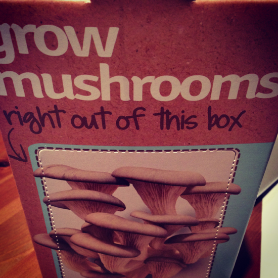 Grow your own Mushrooms Arrival of Box