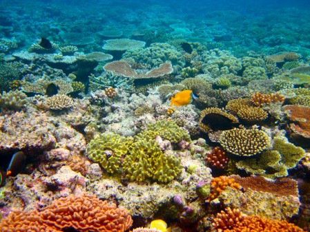Great Barrier Reef by Kyle Taylor Kyle Taylor http://www.flickr.com/photos/kyletaylor/4875021166/