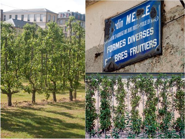 Fruit trees at Le Potager du Roi on eatlivetravelwrite.com