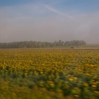 Sunflower fields speeding by on VIA Rail Canadian on eatlivetravelwrite.com