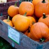 Orange pumpkins on eatlivetravelwrite.com