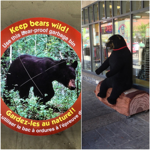 Bear signs in Jasper on eatlivetravelwrite.com