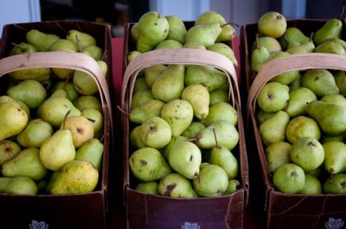 Pears at Delhaven Orchards on eatlivetravelwrite.com