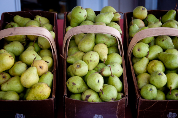 Pears at Delhaven Orchards on eatlivetravelwrite.com
