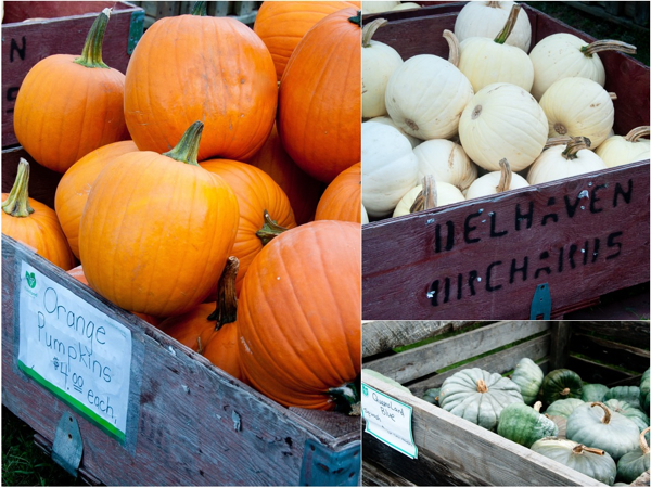 Pumpkins at Delhaven Orchards on eatlivetravelwrite.com