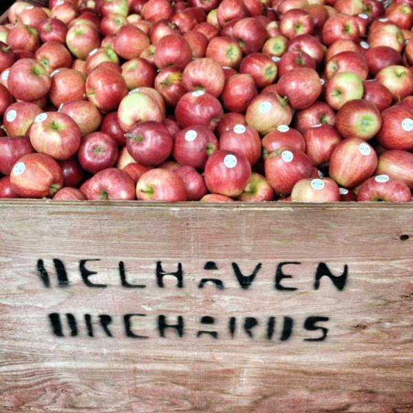 Bin of apples at Delhaven Orchards on eatlivetravelwrite.com