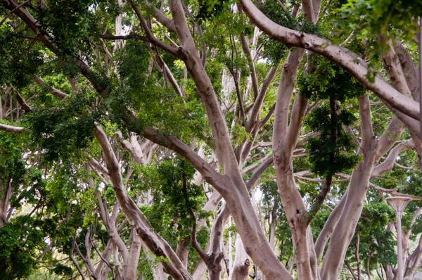 Hyde Park Sydney on eatlivetravelwrite.com