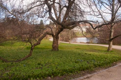 Copenhagen Botanical Gardens on eatlivetravelwrite.com