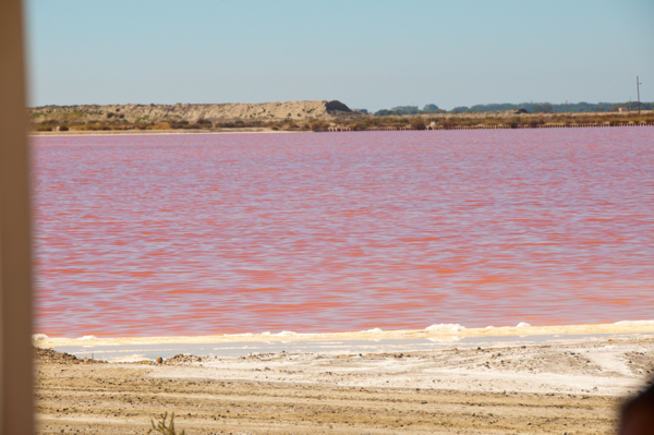 Pink water in the Camargue on eatlivetravelwrite.com