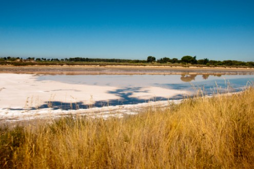 The view from the petit train in the Camargue on eatlivetravelwrite.com