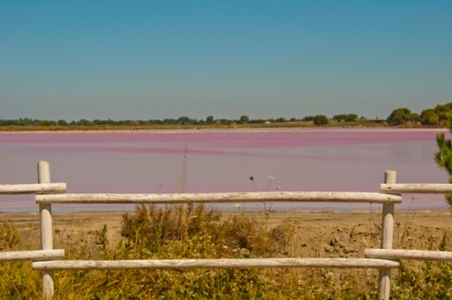 View of the pink water in the Camargue salt flats on eatlivetravelwrite.com