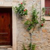 Front door and climbing plant in Neffies on eatlivetravelwrite.com