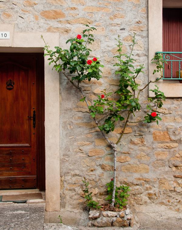 Front door and climbing plant in Neffies on eatlivetravelwrite.com