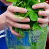 Kids making spinach smoothies on eatlivetravelwrite.com