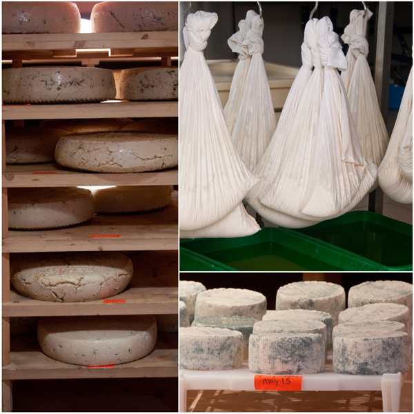 Carmelis goat cheese on eatlivetravelwrite.com