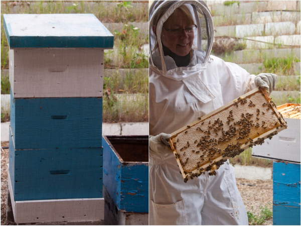 Checking out bee hives at Arlos Honey Farm on eatlivetravelwrite.com
