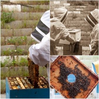 Checking out the bee hives and honey at Arlos Kelowna on eatlivetravelwrite.com