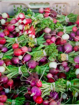 Radishes at the Kelowna Farmers and Crafters Market on eatlivetravelwrite.com