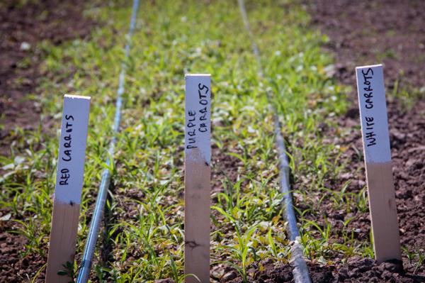 Organic Meadows Farm in Kelowna on eatlivetravelwrite.com