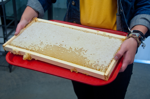 Tasting honey straight from the hives at Arlos Kelowna on eatlivetravelwrite.com