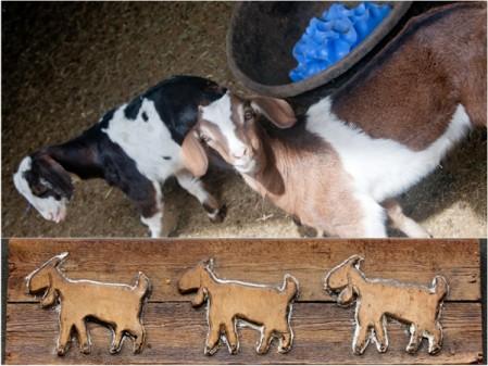Goats at Carmelis Kelowna on eatlivetravelwrite.com