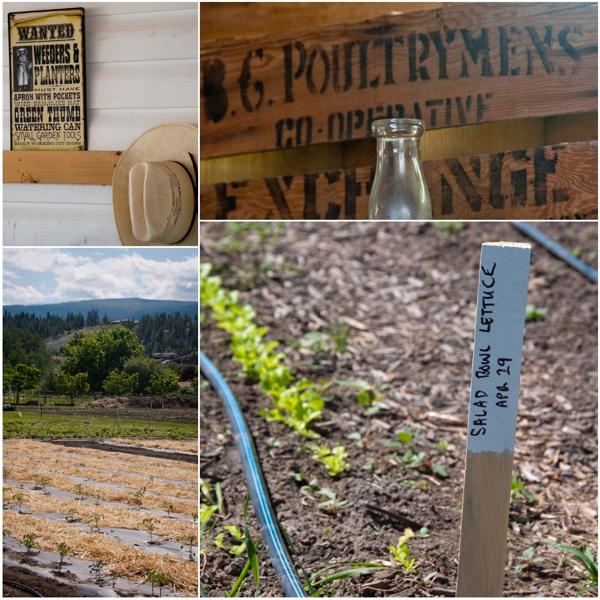 Old Meadows Organic Farm on eatlivetravelwrite.com