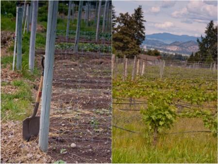 Visiting Summerhill Pyramid Winery gardens on eatlivetravelwrite.com