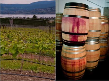 Visiting Tantalus vineyards Kelowna on eatlivetravelwrite.com