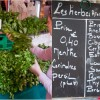 Herbs in market on Context Aligre market tour on eatlivetravelwrite.com