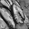 Sardines on eatlivetravelwrite.com