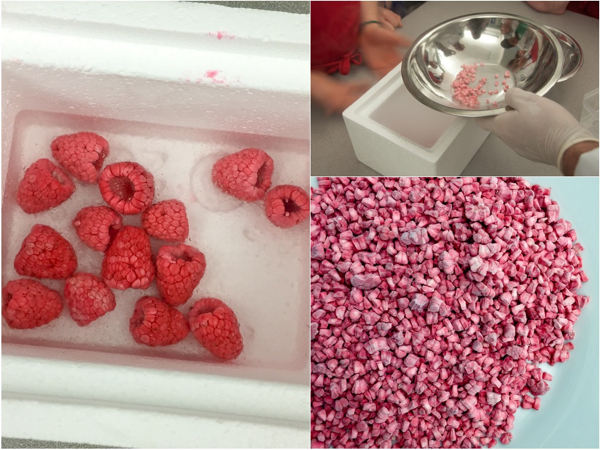 Making freeze dried raspberry niblets with John Placko on eatlivetravelwrite.com