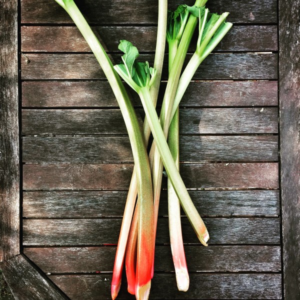 Rhubarb on eatlivetravelwrite.com
