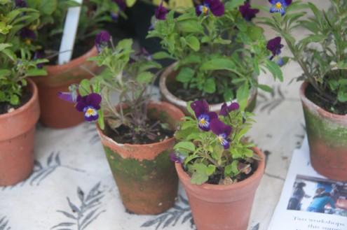 Flower pots at Stroud Farmers Market on eatlivetravelwrite.com