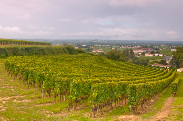 St Emilion vineyards on eatlivetravelwrite.com