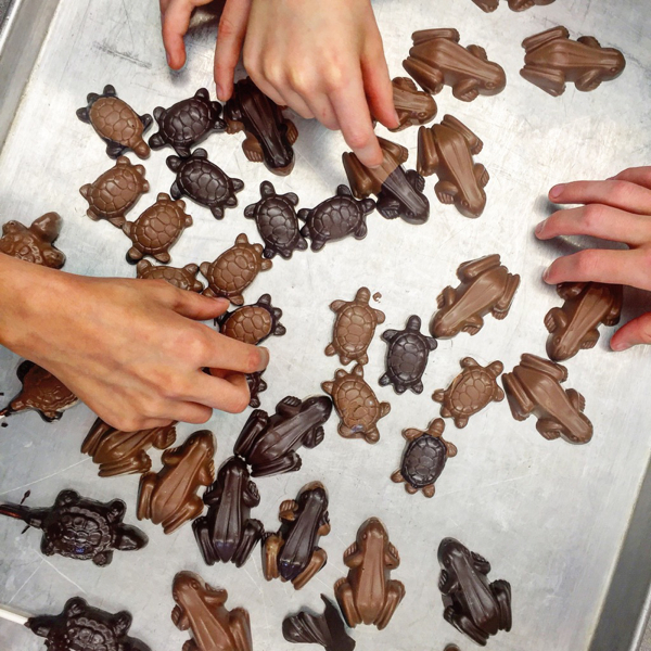 Chocolate frogs made by kids on eatlivetravelwrite.com