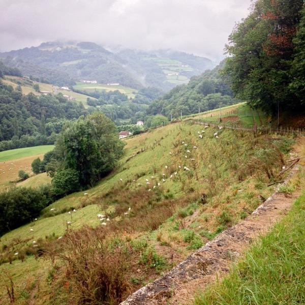 Sheep on a hillside on the road to Valcarlos on eatlivetravelwrite.com