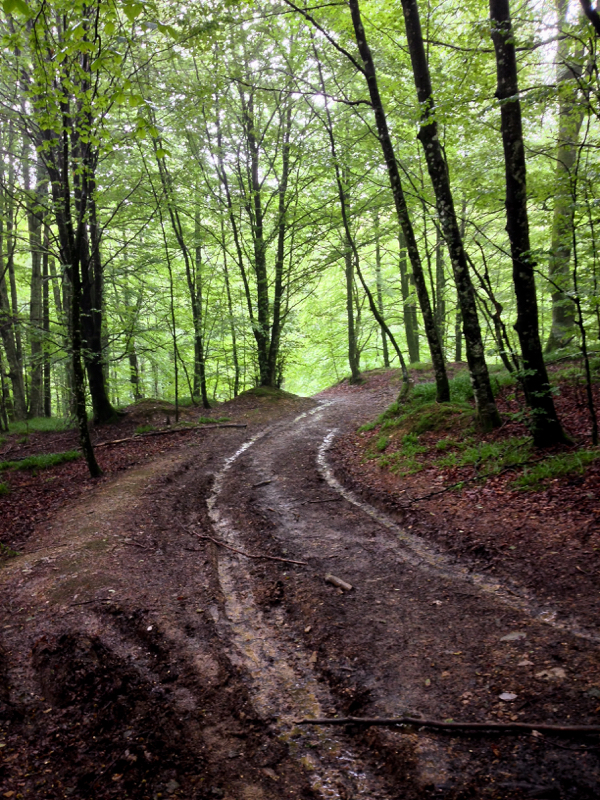 Muddy roads on the road to Roncesvalles on the Camino on eatlivetravelwrite.com