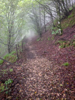 Misty roads on the road to Roncesvalles on the Camino on eatlivetravelwrite.com