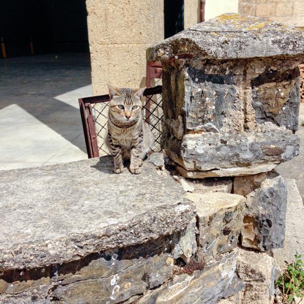 Cat in Linzoain on Camino de Santiago on eatlivetravelwrite.com
