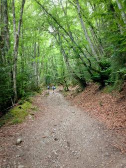 Forest path to Alto de Erro on Camino de Santiago on eatlivetravelwrite.com