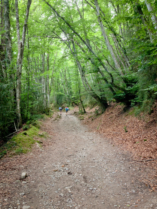 Forest path to Alto de Erro on Camino de Santiago on eatlivetravelwrite.com