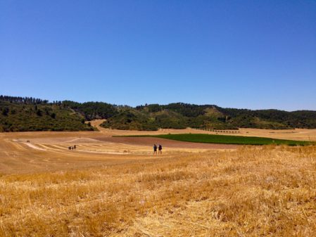 Walking across the fields to Los Arcos with Camino Travel Center on eatlivetravelwrite.com