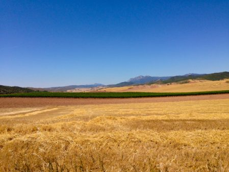 Fields of the Spanish countryside en route to Los Arcos with Camino Travel Center on eatlivetravelwrite.com