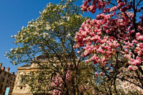 Spring blossoms in Lyon image on eatlivetravelwrite.com