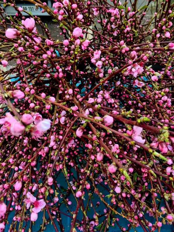 Spring blooms at the market in Lyon image on eatlivetravelwrite.com